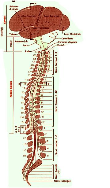 sclerosi multipla staminali